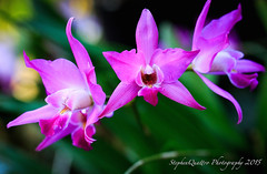 Berggarten Blume (stephenquattro) Tags: flowers germany orchids hanover berggarten mimamorflowers flickrflorescloseupmacros thebestofmimamorsgroups contactgroups
