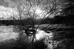 Emsland - Hase_IMG_2373 (milanpaul) Tags: winter germany landscape deutschland wasser alt monochrom fluss landschaft bauwerk baum hase hof februar emsland niedersachsen 2016 schwarzweis canoneos6d tamron2470mmf28divcusd