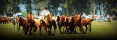 Los Alazanes de Tamboriney (Eduardo Amorim) Tags: horses horse southamerica argentina criollo caballo cheval caballos cavalos pferde herd cavalli cavallo cavalo gauchos pferd ayacucho chevaux gaucho cavall  amricadosul gacho amriquedusud provinciadebuenosaires  gachos  sudamrica suramrica amricadelsur sdamerika crioulo caballoscriollos criollos  tropillas buenosairesprovince americadelsud tropilhas tropilla crioulos cavalocrioulo americameridionale tropilha caballocriollo eduardoamorim cavaloscrioulos