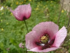 Texturas (0_Detalles_0) Tags: flower color colour petals soft flor textures texturas ptalos suaves