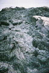 Icy Beach (Rachael.Robinson) Tags: winter canada color film ice beach 35mm island rocks snowy fujifilm campobello