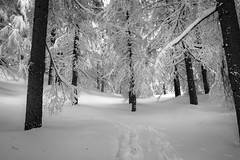 into the woods. (jrseikaly) Tags: trees winter bw lebanon white snow black tree nature forest jack photography high dynamic range arz hdr bnw cedars seikaly jrseikaly