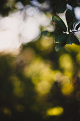 In the sunlight (Forrest Wooten Photography) Tags: color classic nature composition canon vintage 50mm prime takumar bokeh 14 5d smc