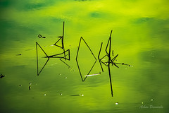 Fischstbchen (fish sticks).... (acbrennecke) Tags: lake fish reflection river sticks nikon outdoor natur riverbanks nikon5500 rsslerweiher achimbrennecke