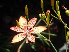 56/366 Orange (JessicaBelotto) Tags: orange flower color planta luz nature garden day foto ar natureza laranja flor dia days honey jardim ao fotografia projeto livre cor fotográfico fotografando 366 366daysofhoney 366diasnoano