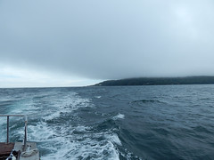 Plymouth-201506-41-FogBank-OverRameHead (Tony J Gilbert) Tags: macro marine underwater plymouth diving scylla jameseaganlayne nikond300 handdeeps wwwdivingplymouthcom ceeking hilseapointrocks
