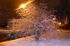 Schneetreiben - Snow Drift (ivlys) Tags: nature germany deutschland evening abend hessen snowdrift lantern laterne allemagne darmstadt schneetreiben hazelnutbush ivlys haselnussbusch