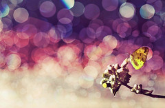 1stt23 (RoJaNafisa) Tags: color butterfly bokeh manipulate