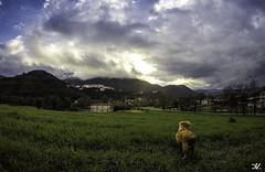 Il Re Leone (Daniele Vettese) Tags: sunset dog verde cane italia ngc valle natura neve di inverno theking frosinone comino atina parato