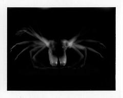Femme crabe (JClomo) Tags: blackandwhite bw nude noiretblanc pinhole instantfilm stnop fp100c
