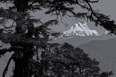 Himalayan Range DSC26102 (KWsideB) Tags: bw mountain monochrome landscape scenery bhutan scenic range himalayan himalayanrange dochulapass himalayanhimalayasmountains