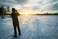 DSC_7754 (Adventurin') Tags: dog sweden stockholm aurora lapland sledding kiruna nothernlights