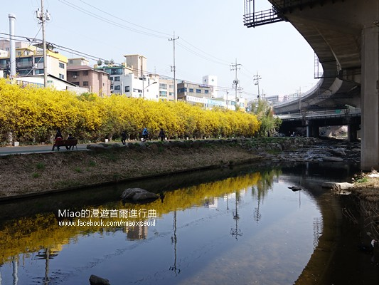 안산공원벚꽃29