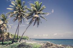 Palmier (Julien Pf) Tags: canon landscape eos rebel landscapes ile ciel 1855mm t3 paysage arbre paysages palmier guadeloupe antilles gwada caraibe antille gwadada 1100d