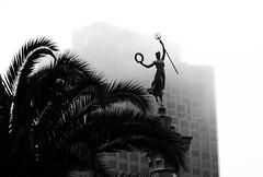 San Fransisco s'embrume (Madeleine) Tags: california street urban bw usa building statue fog architecture america blackwhite streetphotography nb palmier plamtree
