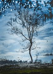 Reflections (Caucas') Tags: blue wild sky cloud plant reflection tree green water azul forest 35mm reflections walking nikon bokeh rosie harmony su law blau 57 reflexin upset bulut yansma riflessione rflexion doa renungan d7000