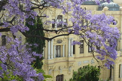 Magnificent Malaga in May (unclebobjim) Tags: sunshine spain blossom may espana jacaranda andalusia shining malaga magnificent artisticpictures exoticimage bestofshining shiningexcellence netartii digitalartscenecertifiedecellence
