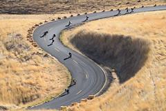 Maryhill Loops Road (gabrehsaur) Tags: downhill maryhill longboarding