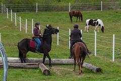 DSCF0357.jpg (Ed Traywick) Tags: horses horse leo robyn obstacles horseclinic