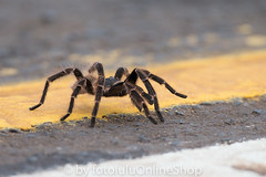 Argentinien_Insekten-52 (fotolulu2012) Tags: tierfoto