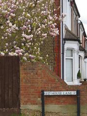 IMG_2373_2661 (maineexile) Tags: england london nt redhouse nationaltrust williammorris bexleyheath 2016 philipwebb