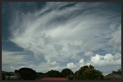 Afternoon Clouds (Zelda Wynn) Tags: trees weather clouds landscape wind windy sunny troposphere newlynn eastauckland zeldawynnphotography