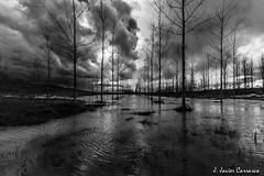 Lazos de agua (AvideCai) Tags: blancoynegro agua arboles paisaje bn nubes reflejos avidecai