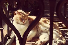 Cat-napping in the sun (Rob Greenwood) Tags: canon spring seville catnap sunbathing canoneos1200d
