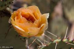 IMG_3220.jpg (ashleyrm) Tags: travel arizona museum sonora desert tucson tucsonarizona