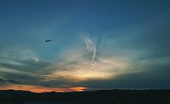 A double sided Sunset ... Light And Shadow Contrails Newtown Powys Clouds Sky Photoshoped Bird Yesterday Divide Divided Cielo    Wales (Almena14) Tags: sunset sky wales clouds cielo yesterday contrails lightandshadow divided divide    newtownpowys photoshopedbird