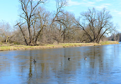 Grand river, Ontario (mouseart005) Tags: blue trees sky ontario reflections river geese spring forrest outdoor grand goose canadageese