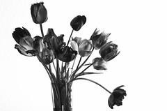 Tulpenstrau BW #3 (efgepe) Tags: flowers bw plants macro blackwhite tulips pflanzen sigma blumen sw nik makro schwarzweiss tulpen lightroom schwarzundweiss sigma70mm sigma70mm28dgmacro silverefexpro pentaxk5