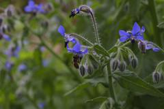 _DSC2035 (Osamu1965) Tags: flower japan zeiss garden spring sony contax jp   okayama     a7m2  carlzeissvariosonnart2870mmf3545mm