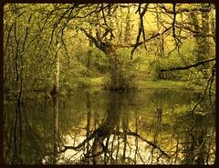 El rbol de la vida... / Tree of life (Yoli Of Shalott) Tags: naturaleza tree nature reflections landscape arbol nikon branches paisaje treeoflife reflejos navarra ramas orgi arboldelavida