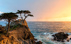 Lone Cypress (Sribha Jain) Tags: monterey pacific lonecypress cypress 17mile