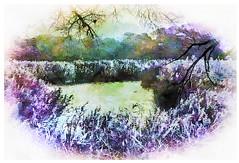 Pentre Mawr wildfowl pond (Gill Stafford) Tags: park wild public water birds wales pond image north ducks photograph recreation fowl waders gillys abergele gillstafford birdspentremawr