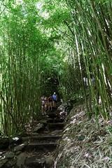 DSC00696_DxO_Grennderung (Jan Dunzweiler) Tags: hawaii jan maui bamboo hanahighway pipiwaitrail oheo bambus oheogulch bambooforest haleakalanationalpark hanahwy hwy360 bambuswald highway360 pipiwai haleakanationalpark dunzweiler haleakanp oheogulch oheo jandunzweiler
