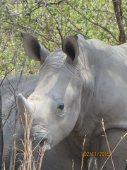Zimbabwe (202) (Absolute Africa 17/09/2015 Overlanding Tour) Tags: africa2015