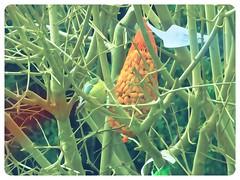 DSC02034 (1) (Enrico Luigi Delponte) Tags: birds sony vogels uccelli sonyfuncamera