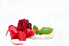 Happy Valetnine... (JCRM6) Tags: flower rose redribbon redrose valentine ribbon flowermacro macroflower d700