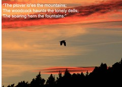 Robert Burns  on birds (BSCG (Badenoch and Strathspey Conservation Group)) Tags: wildlife verse