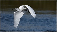 DSC_5556_046 (Gigi Sanna) Tags: sardegna bird eye birds nikon 150 uccelli 600 di campo tele tamron occhio animale uccello stagno d600 allaperto profondit acquatico gigisanna 150600 tamron150600
