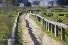 IMG_0421 (Churruk) Tags: naturaleza verde sevilla andaluca rboles camino sombra dehesa