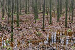 Wet wet wet (Pieter ( PPoot )) Tags: wet mos nat blad bos damp plassen npdwingelderveld vochtig
