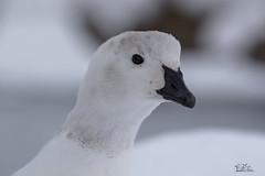 Winter Day in Nature .... (ClaudiB.) Tags: schnee winter snow nature animal animals nikon wildlife natur wildanimal 1001nights 1001nightsmagiccity nikond7100
