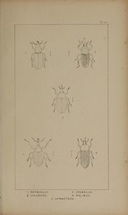 n222_w1150 (BioDivLibrary) Tags: greatbritain insect bugs beetles arthropoda californiaacademyofsciences coleoptera taxonomy:order=coleoptera colorourcollections bhl:page=39307018 dc:identifier=httpbiodiversitylibraryorgpage39307018 bhlarthropod