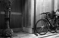 New Year's Pine Decoration (very large) (Purple Field) Tags: street new leica bw film monochrome bicycle japan pine analog 35mm walking 50mm alley kyoto fuji iso400 year decoration rangefinder summicron   neopan m3     presto  f20            stphotographia