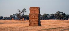 straw bales near corowa (robertmilesdesign) Tags: landscape australia australianlandscape