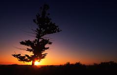 be bold, never regular. (Bec .) Tags: sunset reflection tree beautiful silhouette canon adelaide bec southaustralia 1022mm pathway 10mm 450d semaphorepark beboldneverregular