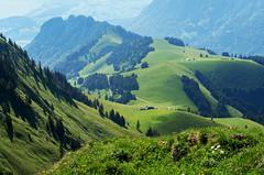 der Sommer auf dem Stockhorn (welenna) Tags: summer mountains landscape switzerland view berge alpen blume berneroberland stockhorn